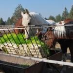 horsefodder