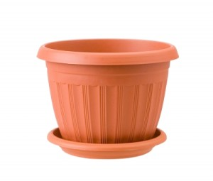 plant micro green pot