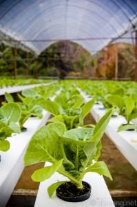 hydroponics6