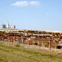 Health Benefits of Consuming Pasture- Raised Animals