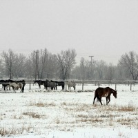 How to Protect Your Livestock from Severe Winter Weather