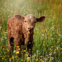 Organic Livestock Farming & Feed Solutions