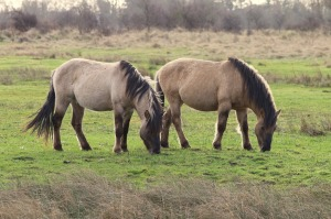pasture management