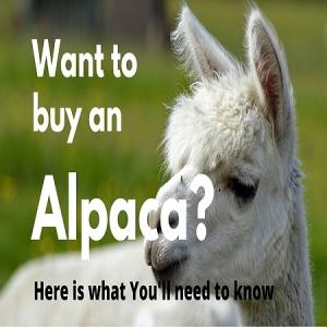 buy alpaca