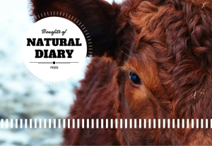 Benefits of natural diary feed.