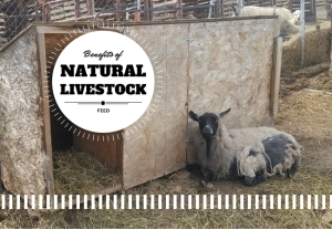 Benefits of natural livestock feed